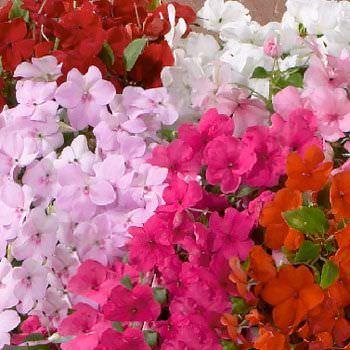 Lista de flores que crecen en la sombra