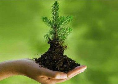 Maneras de ayudar al medio ambiente