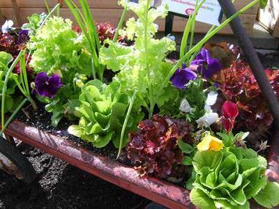 Beneficios de sembrar flores y hierbas en su huerta