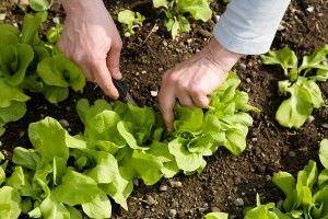 Como cortar las plantas para ayudar en su crecimiento