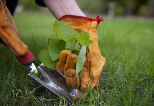 Herbicidas 8 Metodos Naturales1