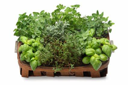 Como Usar las Hierbas como Plantas Companeras