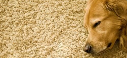 Como quitar el olor de alfombras