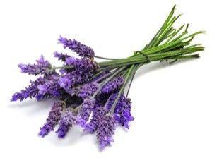 11 Aromas que Pueden Hacer Maravillas por su Bienestar1