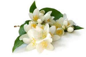 11 Aromas que Pueden Hacer Maravillas por su Bienestar9