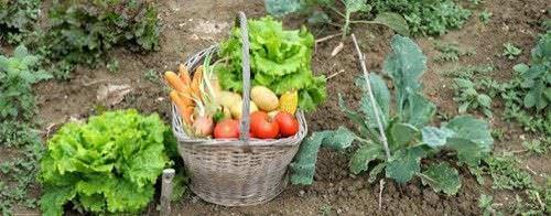 Como Hacer su Propio Fertilizante