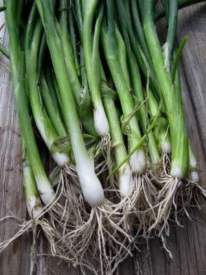 Alimentos que Puede Cultivar a partir de Desechos de la Cocina1