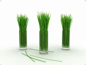 Alimentos que Puede Cultivar a partir de Desechos de la Cocina2