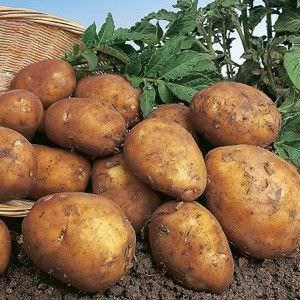 Alimentos que Puede Cultivar a partir de Desechos de la Cocina5