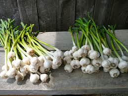 Alimentos que Puede Cultivar a partir de Desechos de la Cocina6