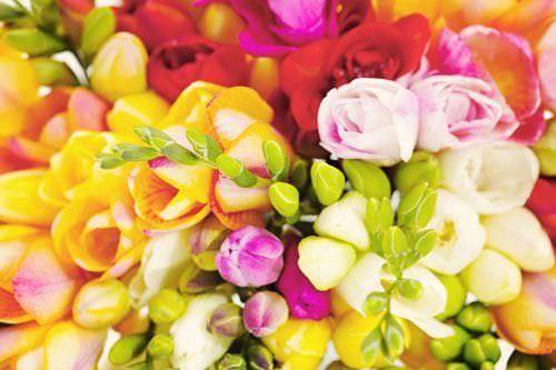 Las Mejores Flores Fragantes para su Jardin