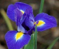 Las Mejores Flores Fragantes para su Jardin11