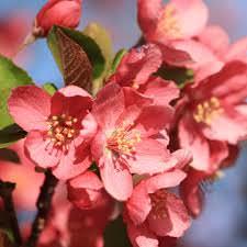 Las Mejores Flores Fragantes para su Jardin13