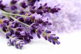 Las Mejores Flores Fragantes para su Jardin15