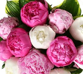 Las Mejores Flores Fragantes para su Jardin17