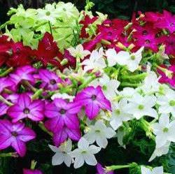 Las Mejores Flores Fragantes para su Jardin3