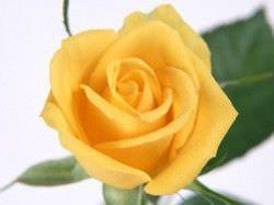 Las Mejores Flores Fragantes para su Jardin7