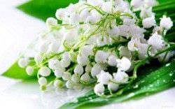 Las Mejores Flores Fragantes para su Jardin9