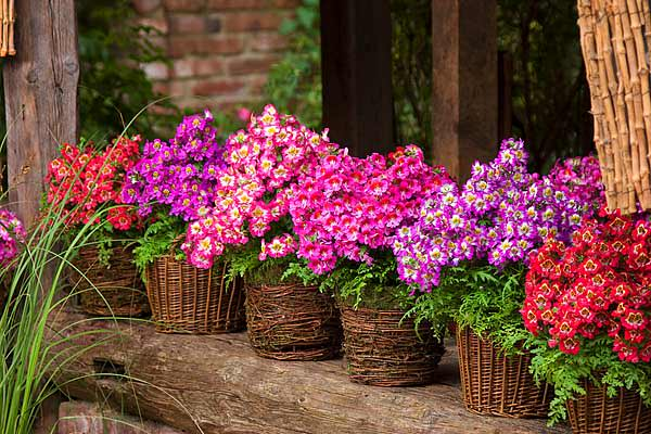 10 Flores Para Un Jardín En El Balcón Ycomo