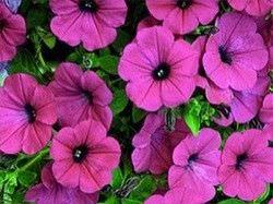 1Las Mejores Flores para un Jardin en el Balcon1
