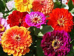 1Las Mejores Flores para un Jardin en el Balcon10