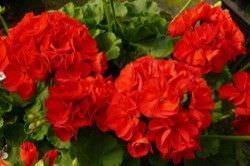 1Las Mejores Flores para un Jardin en el Balcon2