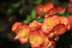 1Las Mejores Flores para un Jardin en el Balcon3