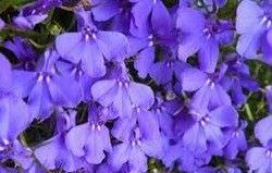 1Las Mejores Flores para un Jardin en el Balcon4