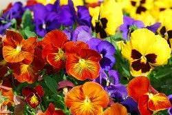1Las Mejores Flores para un Jardin en el Balcon5