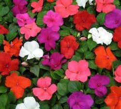 1Las Mejores Flores para un Jardin en el Balcon6