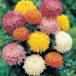 1Las Mejores Flores para un Jardin en el Balcon7