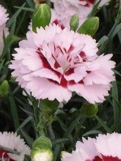 1Las Mejores Flores para un Jardin en el Balcon8