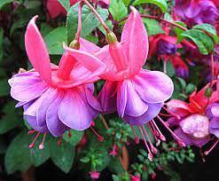 1Las Mejores Flores para un Jardin en el Balcon9
