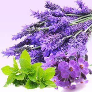 Plantas que Puede Usar como Repelen Natural para Pulgas y Garrapatas