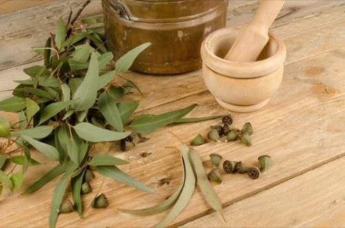 1Beneficios Medicinales del Aceite Esencial de Eucalipto