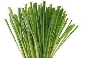 lemongrass4